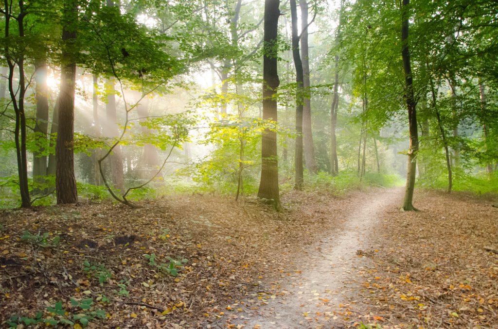 gray-pathway-surrounded-by-green-tress-41102