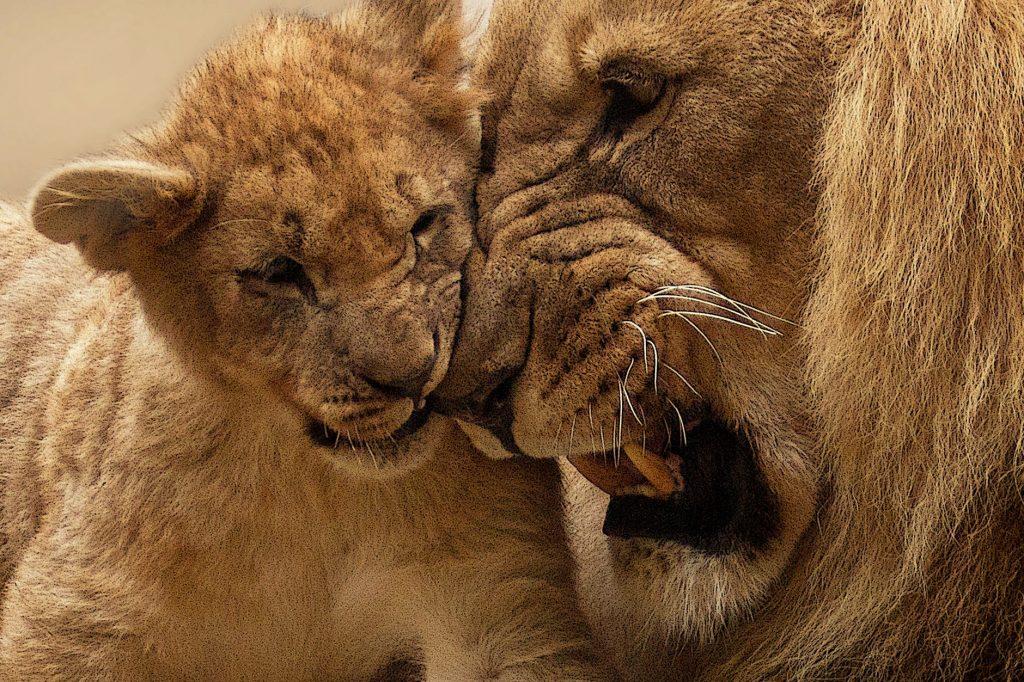 animal cute fur africa