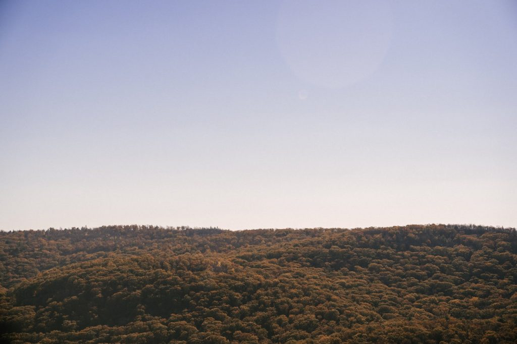 green lush forest on mountain ridge
